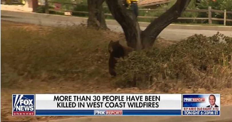棕熊從樹叢現身後,嚇了女記者一跳。(圖/翻攝自Fox News)