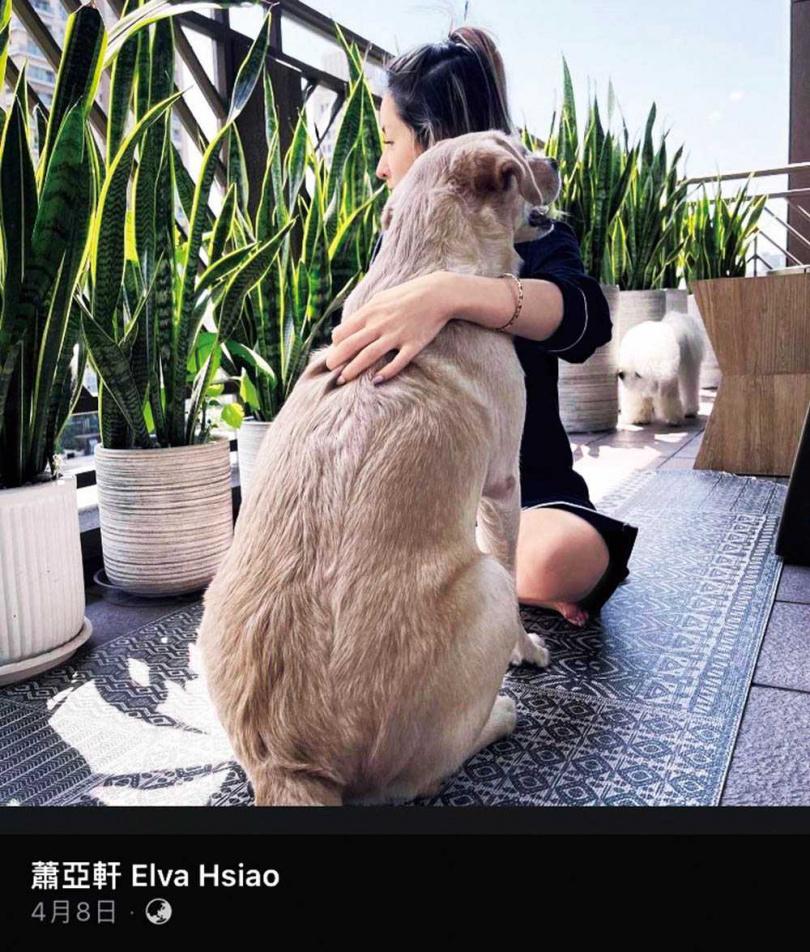 四月初蕭亞軒秀出和愛犬的合照,照片中的陽台景緻和她與黃皓同居的愛巢明顯不同。(圖/翻攝自蕭亞軒臉書)