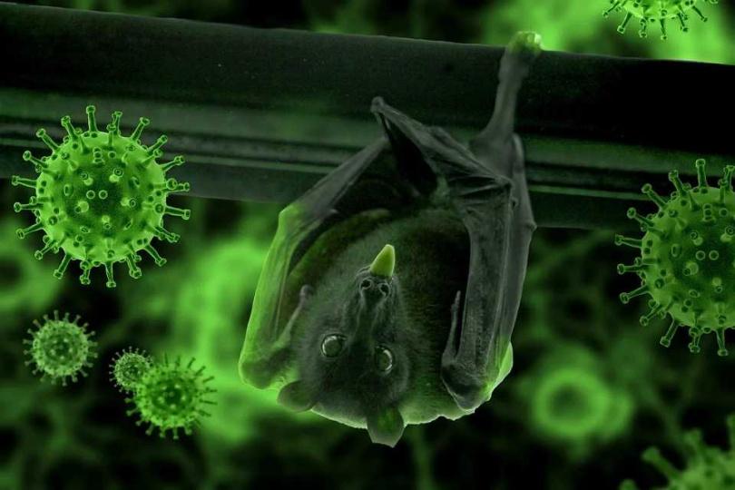 負責清理蝙蝠排泄物的礦工染上類似肺炎的疾病?(圖/Pixabay)