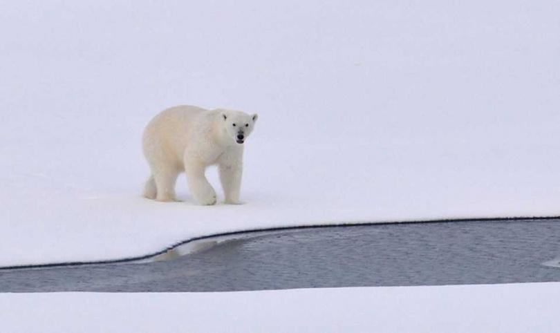 北極熊竟把直升機的窗玻璃給碰掉。(圖/Pixabay)