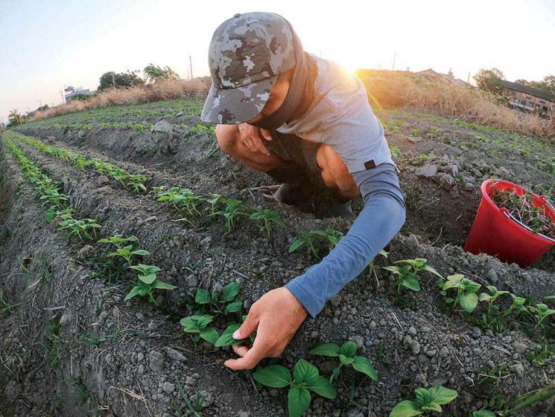 杜碩庭想透過品牌幫農民爭取合理收益,並建立能留住在地年輕人的產業。(圖/品牌提供)