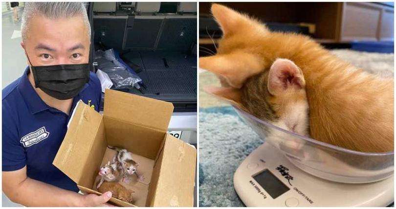 3隻貓咪成為家中新成員。(圖/翻攝自臉書/好門媳婦的秘密生活郁小方)