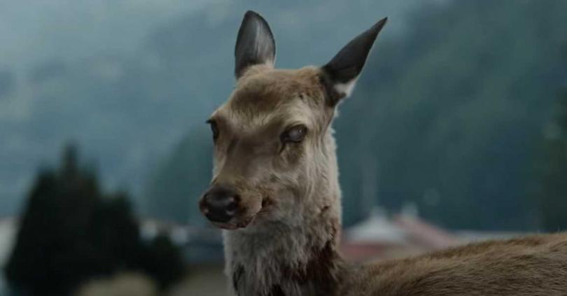 南韓電影《屍速列車》中,一頭感染「殭屍病毒」的鹿雖然被撞死,仍然爬起行走。(圖/翻攝自電影畫面)