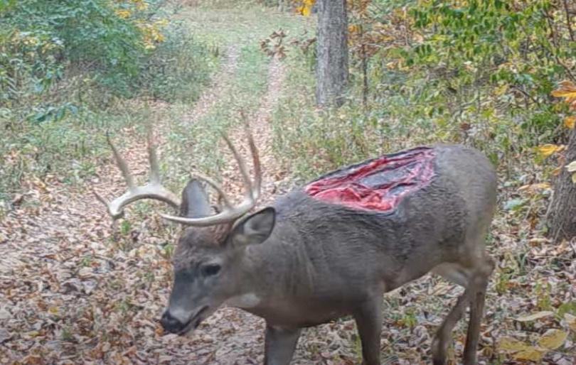 美國伊利諾州竟然真的出現了一隻「喪屍鹿」。(圖/翻攝自whiskeyriff.com)