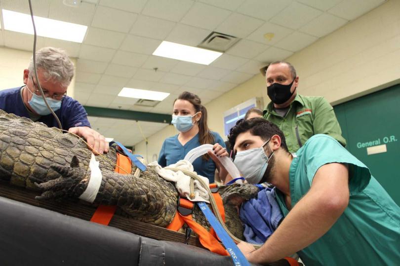 獸醫曾試著自食道取出鞋子卻失敗。(圖/翻攝自University of Florida College of Veterinary Medicine臉書)