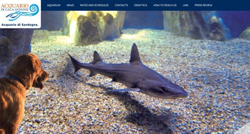 科學家也表示,這類罕見的生殖案例,不應被視為可能解決全球鯊魚數量遞減問題的方案。(圖/翻攝自Acquario Cala Gonone網頁)