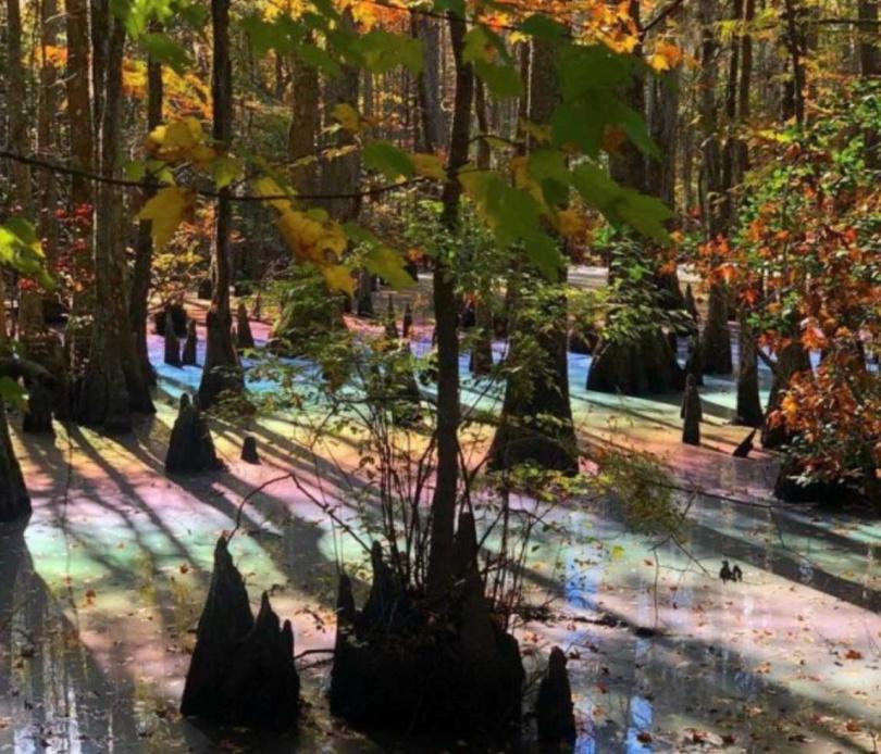 閃爍著彩虹色澤的沼澤,非常吸引目光。(圖/翻攝自reddit)