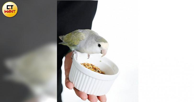 小叮噹是周明璟的「公關鳥」,性情穩定、不躁動。(圖/戴世平攝)