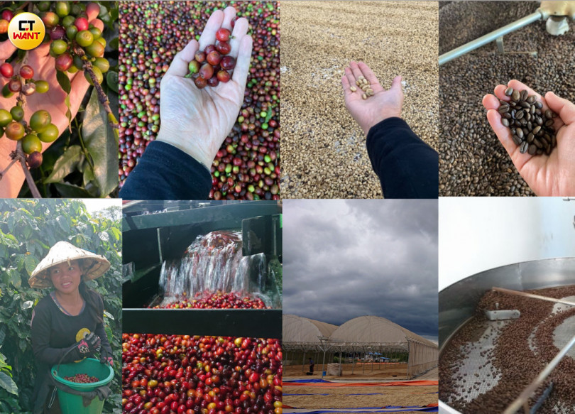 咖啡從樹上採下來,經過水洗、日曬及烘焙等步驟,最後才變成日常喝的咖啡豆。(圖/朱晨寧攝)