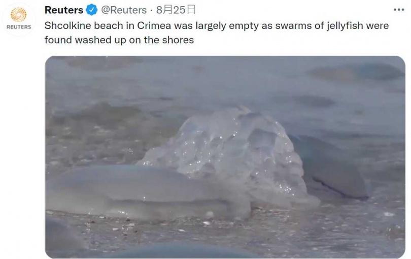 大量水母被沖刷上克里米亞半島海岸。(圖/截自路透社推特)
