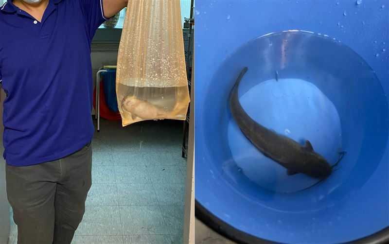 有網友的同事下樓救被水淹的愛車,順便撈到一條魚。(圖/翻攝自PTT)