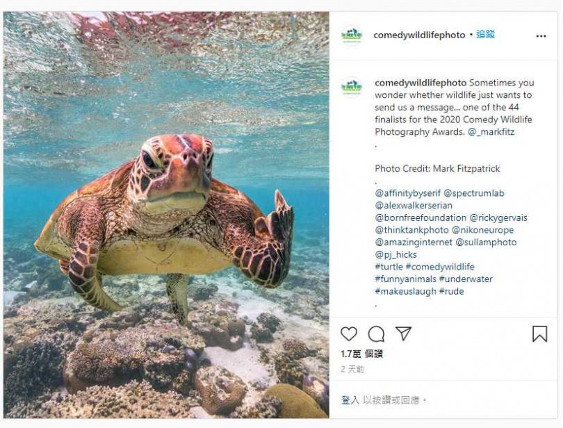 游到一半遭攝影師偷拍,海龜爆怒「比中指」。(圖/Comedy Wildlife Photo IG )
