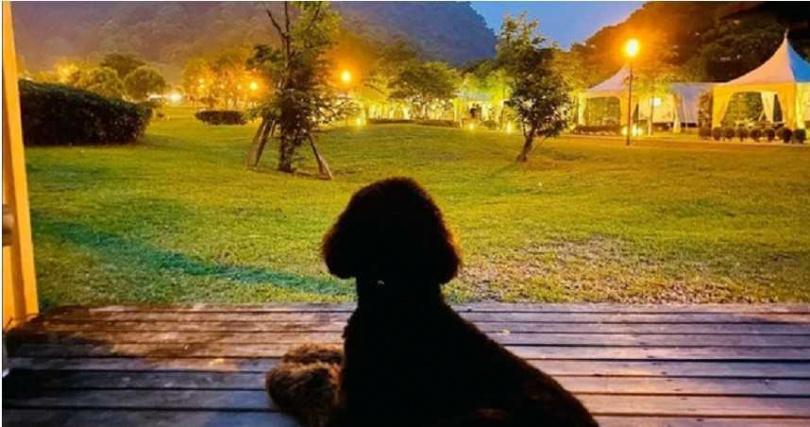 周杰倫露營也帶愛犬,讓粉絲羨慕不已。(圖/翻攝自周杰倫IG)