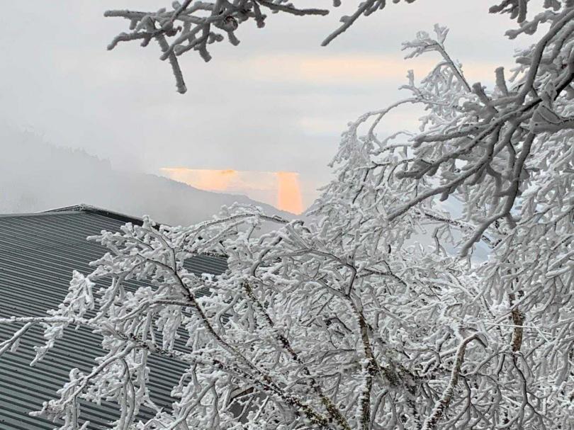 (圖/太平山國家森林遊樂區臉書)