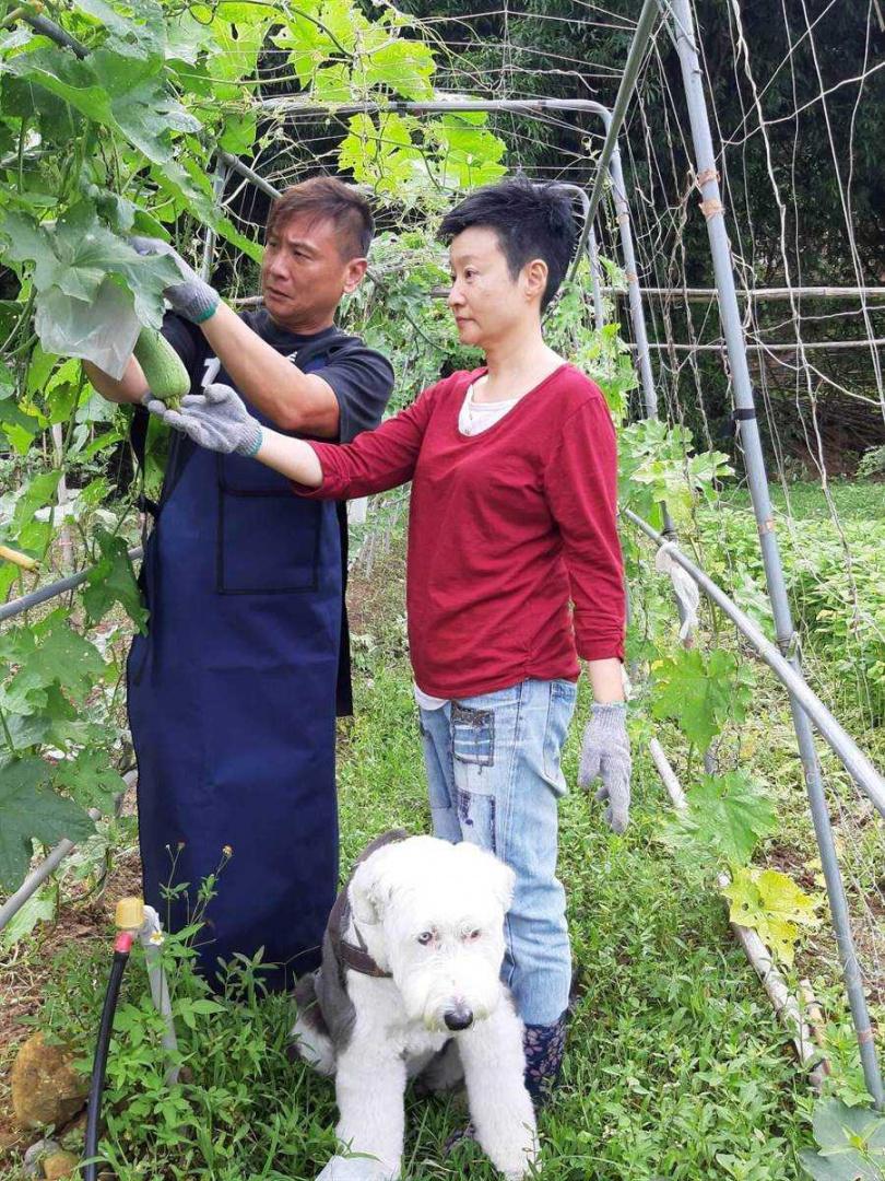 張世和詹婉妮鶼鰈情深,享受勞動種菜的鄉間生活。(圖/詹婉妮提供)