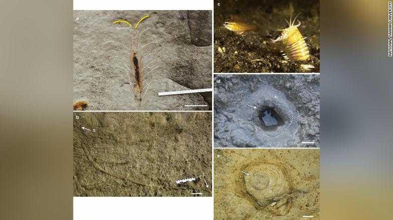 台灣東北部發現2000萬年前的巨大蠕蟲巢穴,經過重建痕跡化石後,推估巢穴長達約2公尺,直徑在2.5公分左右。(圖/取自Scientific Report官網)