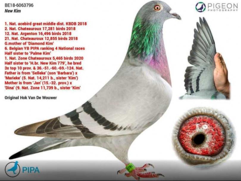 漂亮的鴿子「新金」在網路上,以180英鎊的價格開始拍賣時,引起了一些人的注意。(圖/取自PIPA)