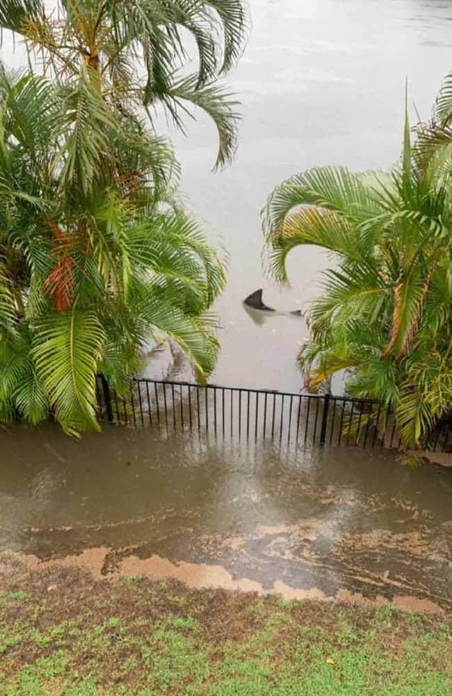 澳洲洪水氾濫成災,民眾住家後院驚見公牛鯊。(圖/翻攝自Timothee Morrison Dufour臉書)