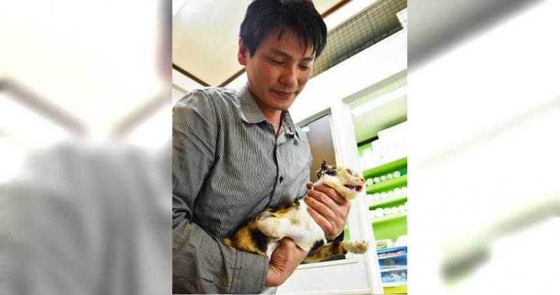 陳勇稱過去曾因為以「低溫手術」救過流浪貓,曾被新聞媒體報導,還稱他為「俠醫黑傑克」。(圖/報系資料照)