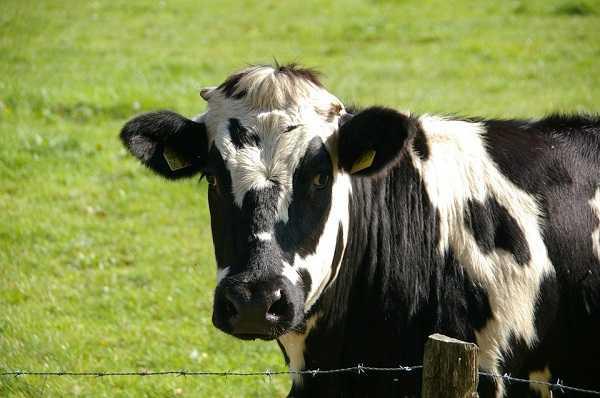 炭疽病會發生在草食性的家畜或野生動物等。(示意圖/翻攝自Pixabay)