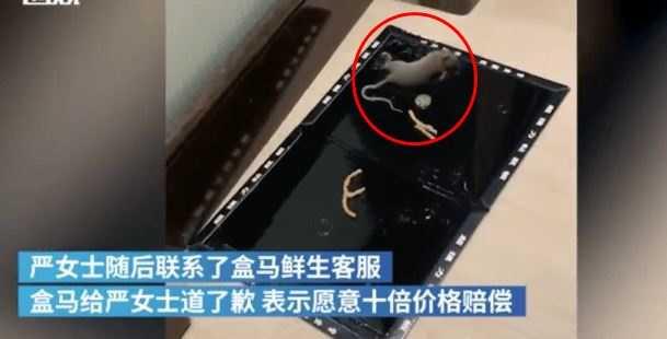 女子買了黏鼠板,終於捕獲老鼠。(圖/翻攝自搜狐新聞)