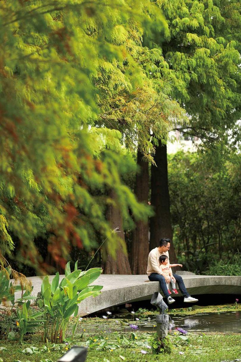 「菁芳園」園區種植多株落羽松,景致迷人,宛如置身於祕境裡。(圖/于魯光攝)