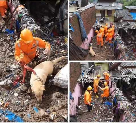 印度孟買郊區暴雨後發生土石流,搜救隊派出搜救犬救人。(圖/翻攝自satyaprad1 Twitter)
