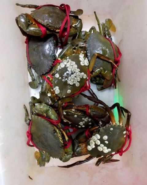 螃蟹殼上長出十幾粒超噁白色瘤狀物,內行網友卻大讚美味。(圖/翻攝自「爆系知識家」臉書)