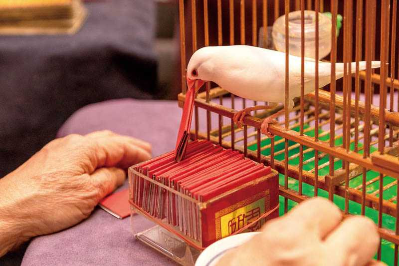 特地為戲學習塔羅牌的陳妤,這回以鳥卦占卜工作運勢。(圖/焦正德攝)