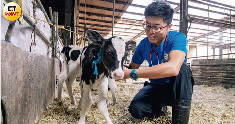 剛出生的小牛很容易拉肚子,本身是獸醫的龔建嘉都會特別照護。(圖/宋岱融攝)