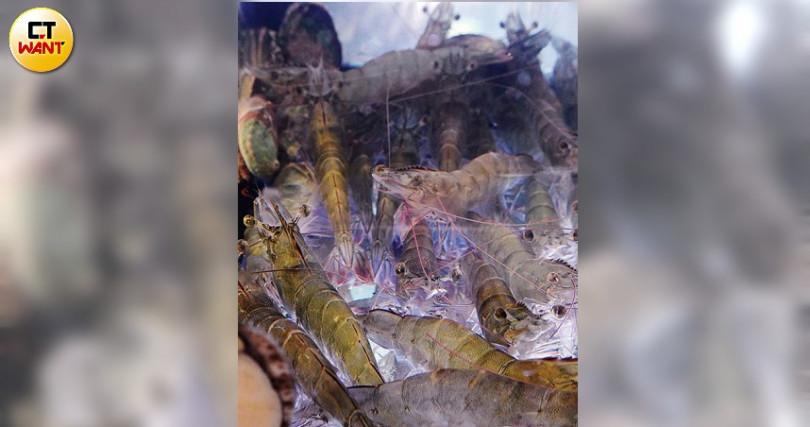 水族箱內活跳跳的大尾白蝦,都是新鮮的活食材。(圖/于魯光攝)