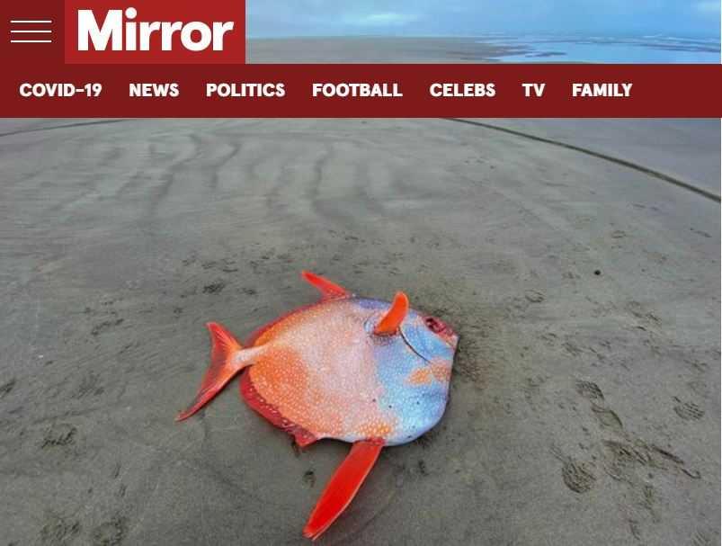 巨大的「月魚」被沖上海岸。(圖/翻攝自Mirror)