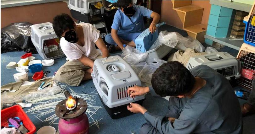 阿富汗爆發大規模逃難潮,動物救援組織希望幫助動物撤離。(圖/翻攝自Kabul Small Animal Rescue)