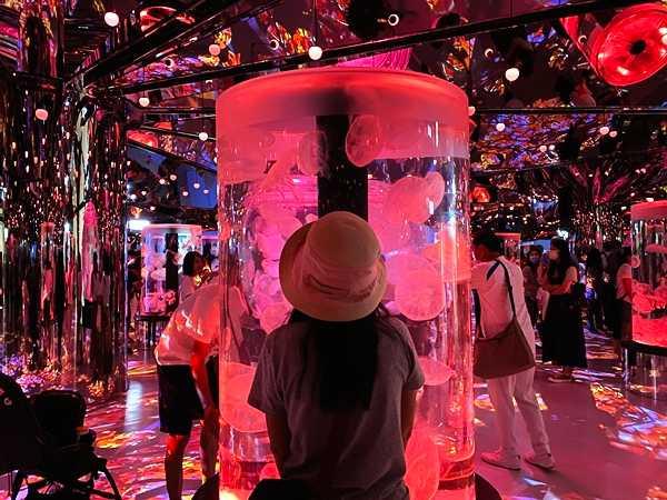 青埔 Xpark 水族館是日本橫濱「八景島水族館」首座海外分館。(圖/房產4.0提供)