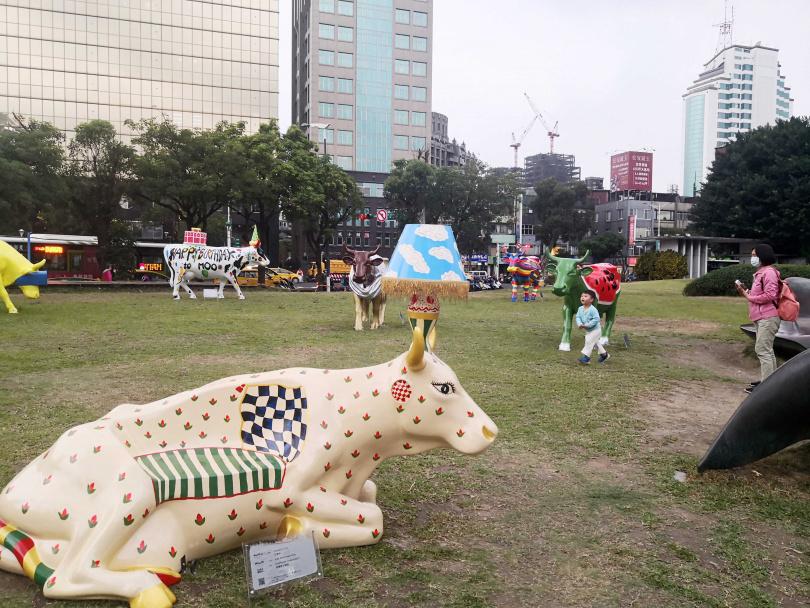 在華山大草原快閃第一天,便吸引民眾拍攝藝術牛。
