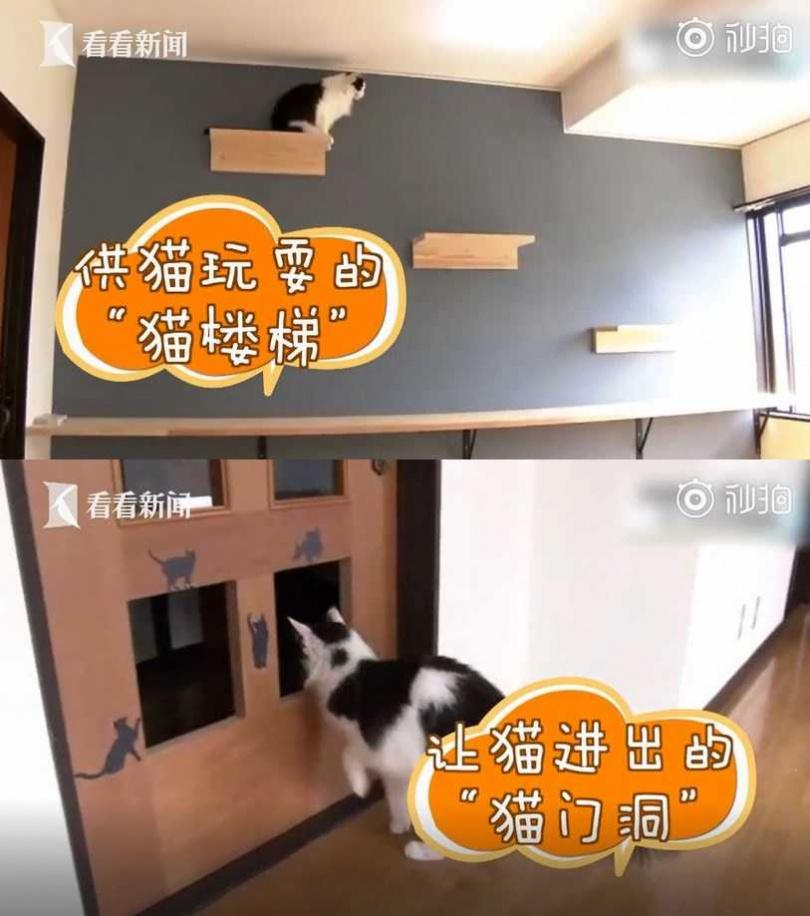 日男打造貓咪公寓,希望降低貓咪安樂死數量。(圖/看看新聞)