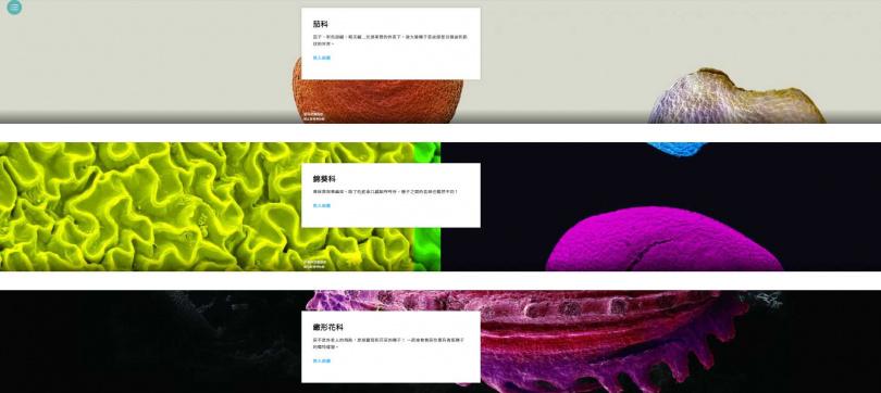 國立臺灣博物館策劃「種子美術館」線上展,以微觀角度觀看各色蔬果種子。