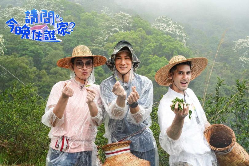 王傳一(左起)、鍾承翰、肯納到三峽採茶。(圖/東森超視提供)