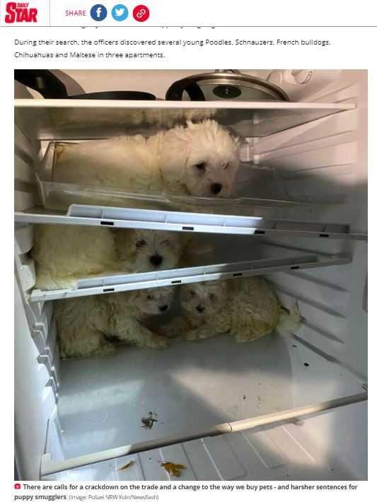 警方逮捕動物走私嫌犯,救出被藏在冰箱內的4隻狗狗。(圖/翻攝自Dailystar)