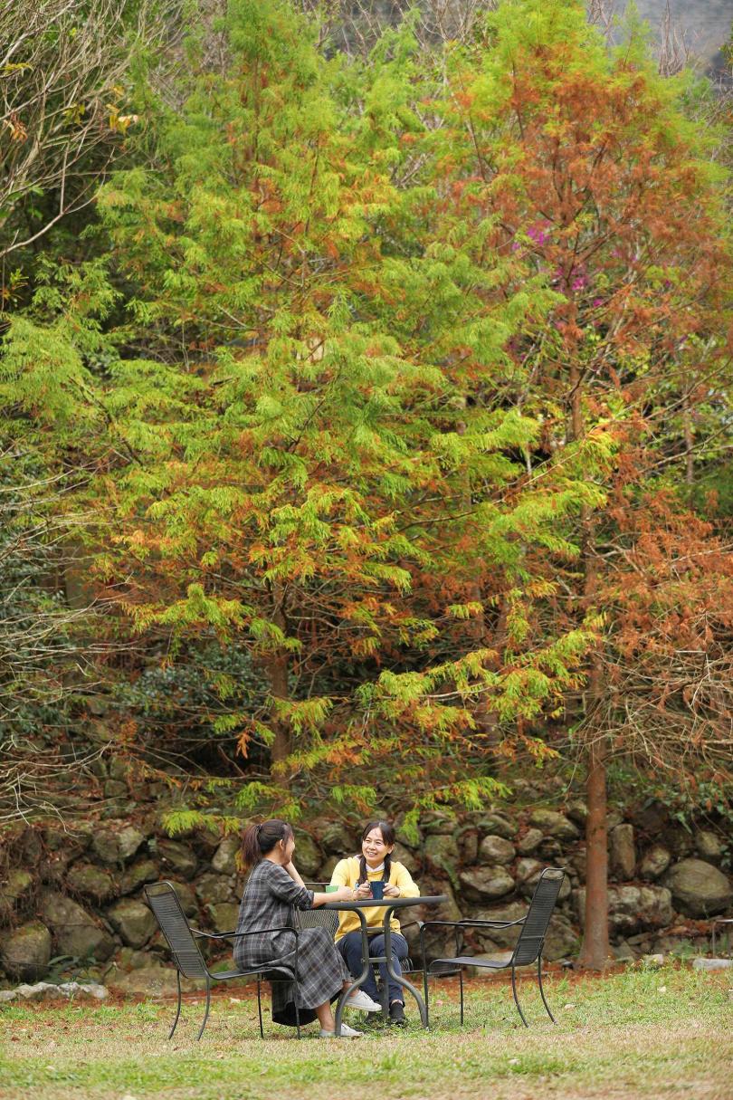 「私房雨露休閒農場」的主人在園區裡種植了落羽松、楓樹、五葉松、桂花、肖楠及櫻花等樹木,不同季節造訪,皆有不同風情。(圖/于魯光攝)