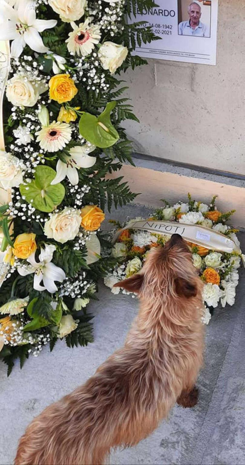 狗狗在墓前思念過世的主人。(圖/翻攝自Sara Sechi臉書)