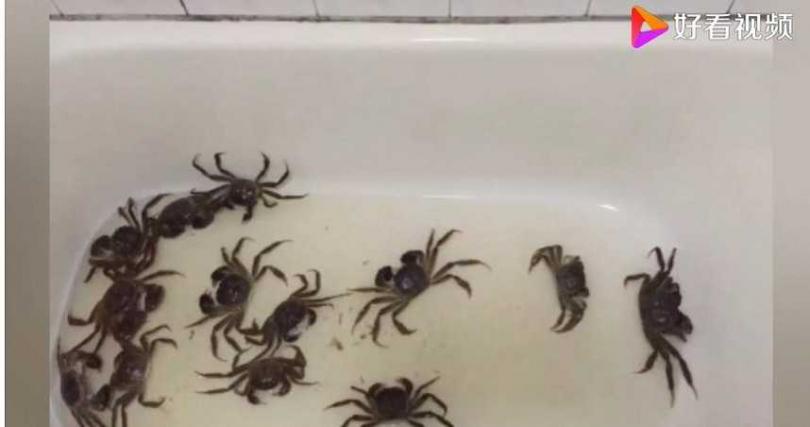 有人在浴缸養螃蟹,也可隨時吃到最新鮮水產。(圖/好看視頻)
