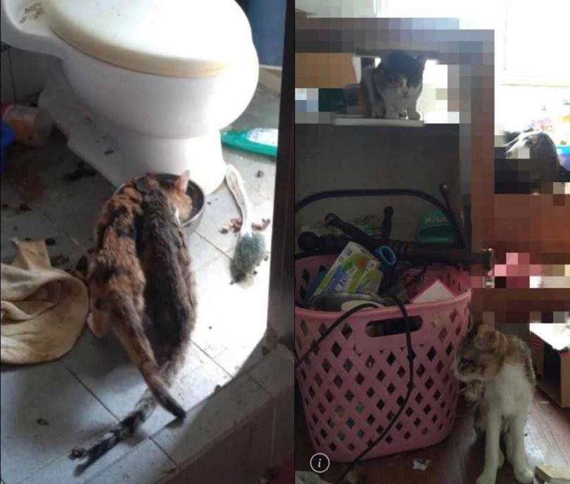 貓咪生活在食物不充足,又髒亂的環境中。(圖/翻攝自《貓咪也瘋狂俱樂部 CrazyCat club》臉書)