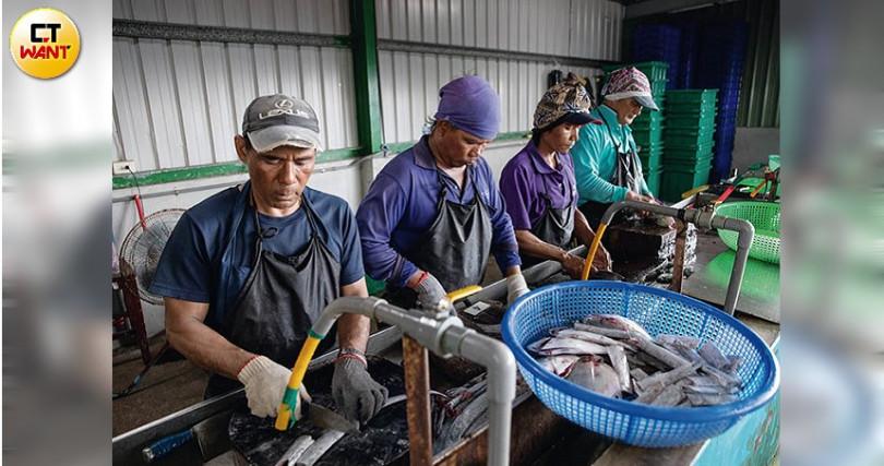 印籍與台籍船員的團結與融洽,讓鄭明發的漁場愈做愈有信心。