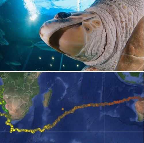 (圖/Two Oceans Aquarium臉書)