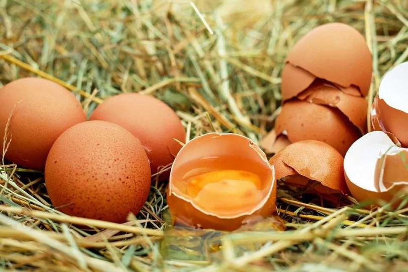 南韓衛生單位分析推測,可能是海苔飯捲使用的雞蛋未完全煮熟,而雞蛋內藏有沙門氏菌,才會釀成這是憾事發生。(圖/Pixabay)