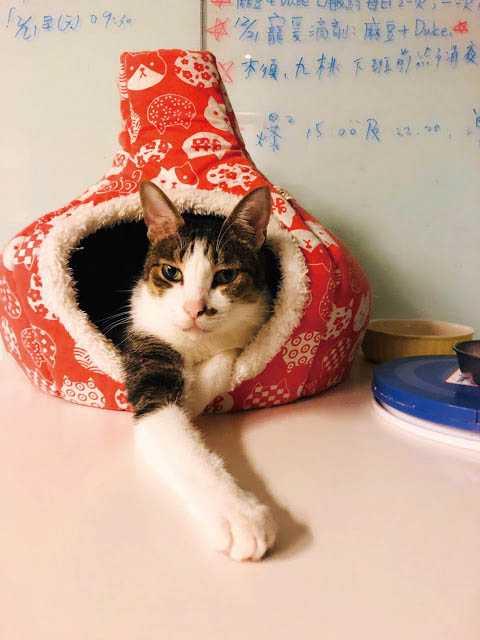 貓掌櫃參與「浪浪療癒」公益計畫,為流浪貓舒緩身心壓力。(圖/翻攝自貓掌櫃部落格)