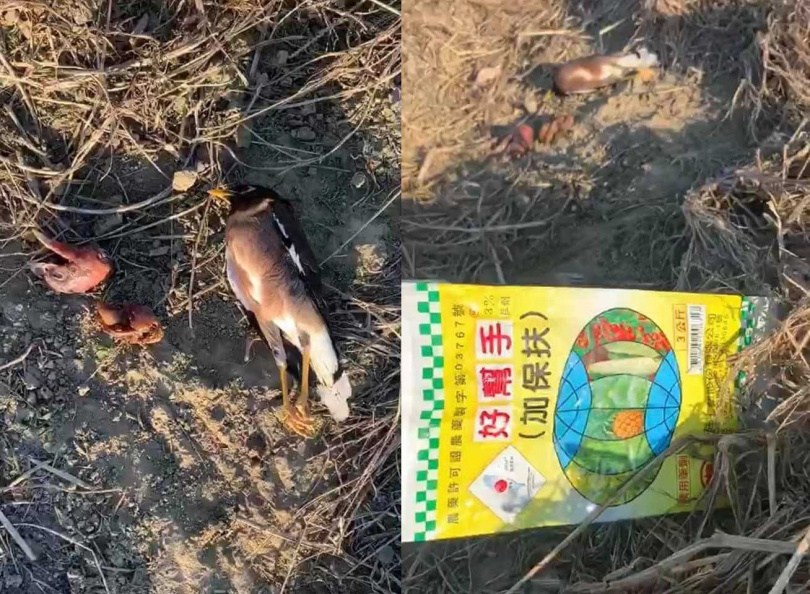 現場有疑似殘留的農藥袋,也有鳥隻被毒死。(圖/翻攝自《新竹市浪愛傳遞貓狗TNVR協會》臉書)