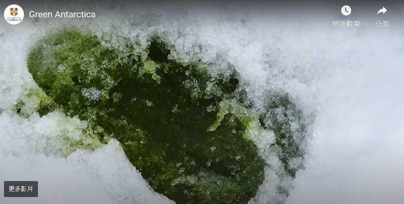 這不是淋上哈密瓜果醬的刨冰,而是南極被藻類侵襲的證明!(圖/Youtube)