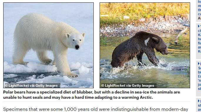 北極熊和灰熊交配,產出適應暖化的下一代。(圖/翻攝自每日郵報)